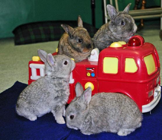 rabbitsfiretruck