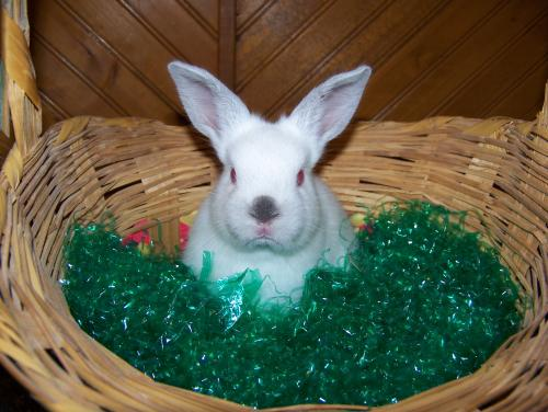 easter_bunny_500